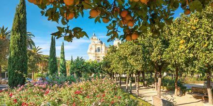 Prunkande park i Malaga, Spanien.