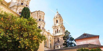 Malagas katedral.