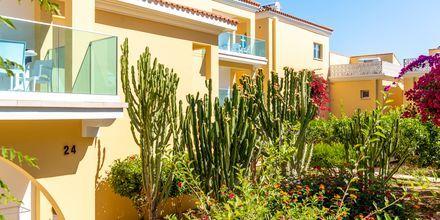 Grönskande områden på hotell Malama Beach Holiday Village i Fig Tree Bay på Cypern.