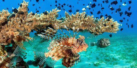 Hela landet består av öar och korallrev, vilket underlättar för fantastisk snorkling på Maldiverna.
