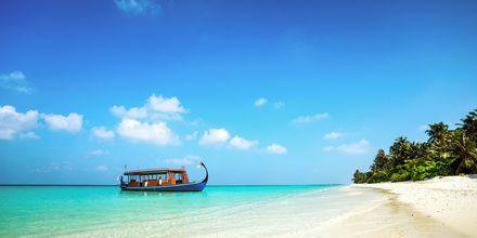 Ta en båttur ut till en obebodd ö över dagen - det är rena rama Robinson!