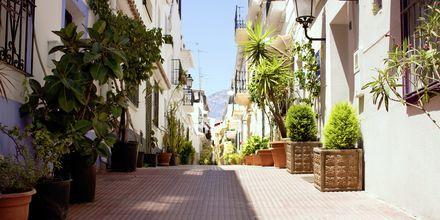 Gata i Marbellas gamla kvarter, Spanien.