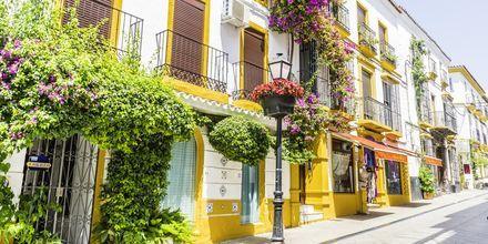 Vita hus klädda med blommor i Marbella, Spanien.