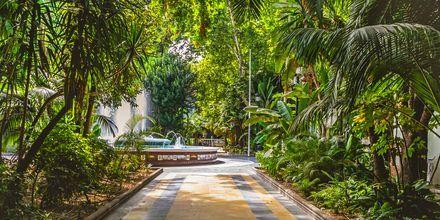 Grönt och skönt i Marbella, Spanien.