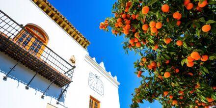 Apelsiner på Apelsintorget i Marbella, Spanien.