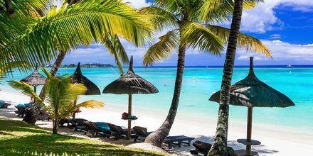 Svajanade palmer skapar skugga på de vackra stränderna i Mauritius.