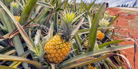 På Mauritius växer en mindre ananas.