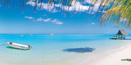 Drömlik semester i klaraste vatten på Mauritius.