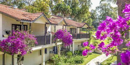 Familjerum på hotell Melas Holiday Village i Side, Turkiet.