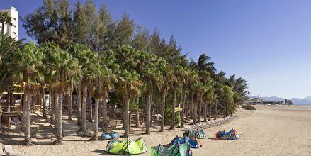 Stranden vid hotell Melia Fuerteventura, Playa Barca, Fuerteventura.