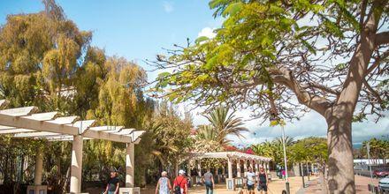 Meloneras på Gran Canaria, Spanien.
