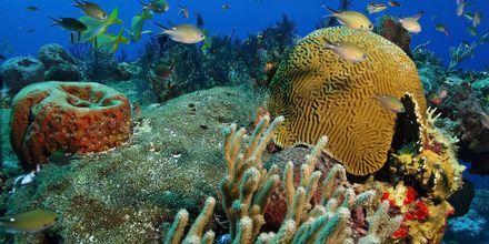 Fantastisk dykning på ön Cozumel i Mexiko.
