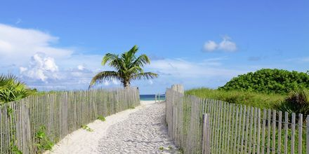Miami i Florida, USA.