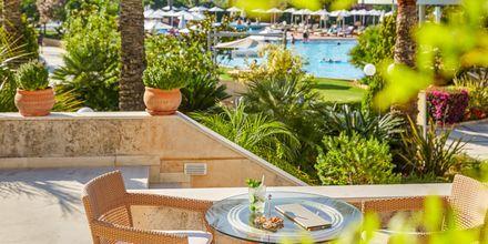 Hotell Minoa Palace resort & Spa i Platanias på Kreta, Grekland.