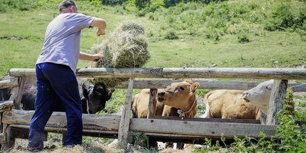 Lantbrukare i Montenegro.