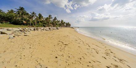Strand i Negombo på Sri Lanka.