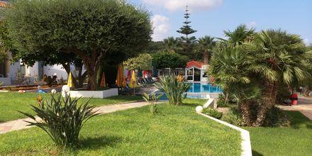 Trädgård på hotell Nikolas Villas vid Hersonissos på Kreta.
