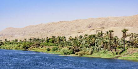 Nilens grönskande omgivningar.