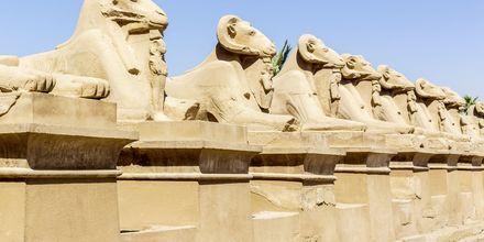 Utflykt till Karnak.