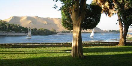Nilens grönskande miljöer.