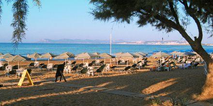 Stranden vid hotell Ninemia Beach i Agia Marina, Kreta.