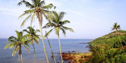 Anjuna Beach i norra Goa.