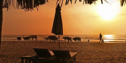 Strand i norra Goa, Indien.