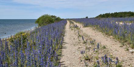 Mysig kustväg på Öland.