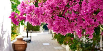 Hotell Olympia Village i Kokkari på Samos, Grekland.