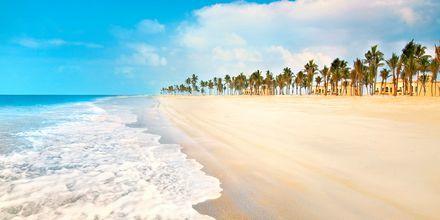 Stranden vid Salalah i Oman.