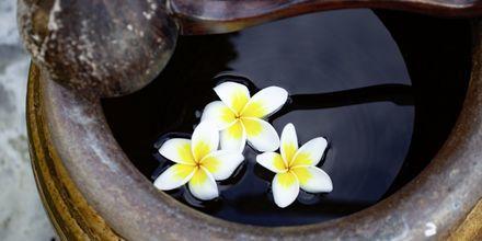 Trädgård på Orchidacea Resort vid Kata Beach, Phuket, Thailand.