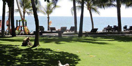 Trädgården på hotell Oriental Pearl Resort i Phan Thiet, Vietnam.