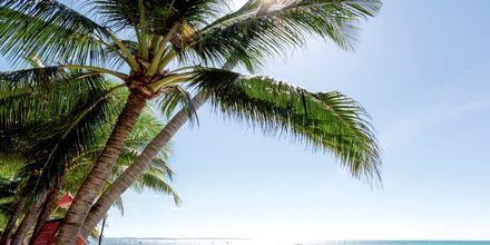 Stranden vid hotell Oriental Pearl Resort i Phan Thiet, Vietnam.