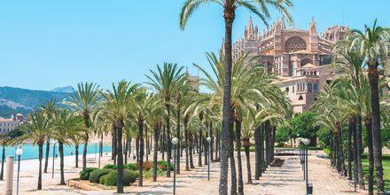 Stadens mest kända landmärke är katedralen La Seu. Palmerna kommer inte långt därefter.