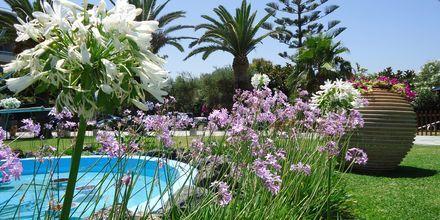Trädgård på hotell Panorama i Kato Stalos på Kreta, Grekland.