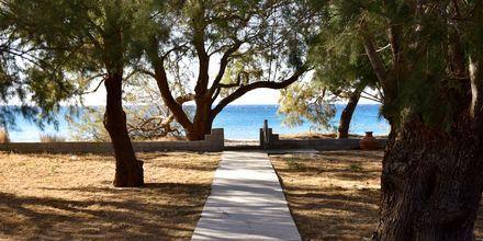 Stranden vid hotell Pavlis i Votsalakia på Samos, Grekland.