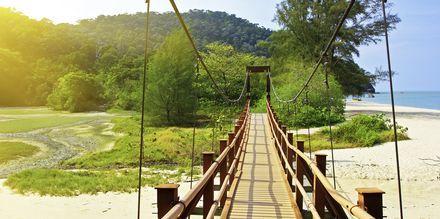 Klassisk hängbro i Penangs regnskog.