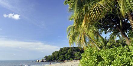 Stränderna i Penang och övriga Malaysia lockar till lata semesterdagar.