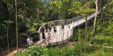 The Habitat på Penang Hill. Vandra i regnskogen!