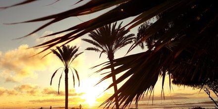 Vacker solnedgång i Playa de las Americas på Teneriffa, Kanarieöarna.