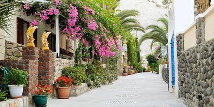 Grönska och bougainvillea vid hotell Polydefkis i Kamari, Santorini, Grekland.