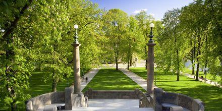 Park på ön Strelecky i Prag.