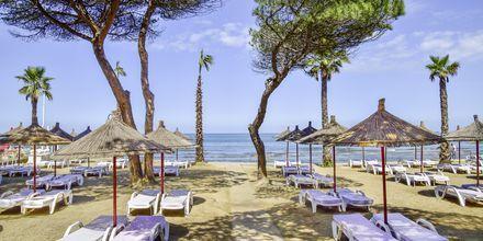 Stranden vid Prestige Resort på Durres riviera, Albanien.