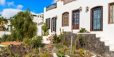 Traditionell kaktusträdgård i Puerto del Carmen på Lanzarote, Kanarieöarna.