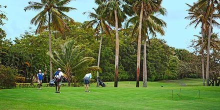 Golfbanan i Playa Dorada, Puerto Plata, Dominikanska republiken.