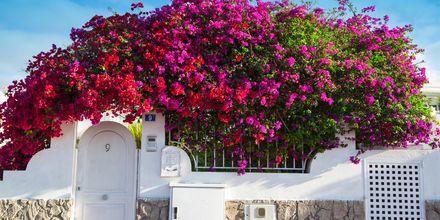 Puerto Rico på Gran Canaria, Spanien.