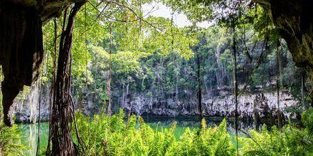Vacker natur i Punta Cana, Dominikanska republiken.