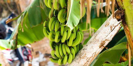 De gröna bananerna är karaktäristiska för Dominikanska republiken.