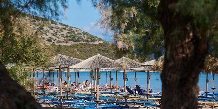 Vackra vyer vid stranden Psili Ammos i Pythagorion på Samos, Grekland.