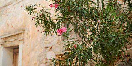 Pythagorion på Samos, Grekland.